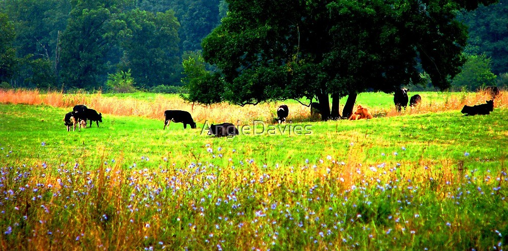 Till the Cows Come Home by AngieDavies