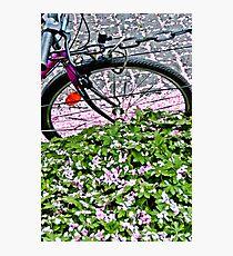 Biking through petals in Bonn Photographic Print