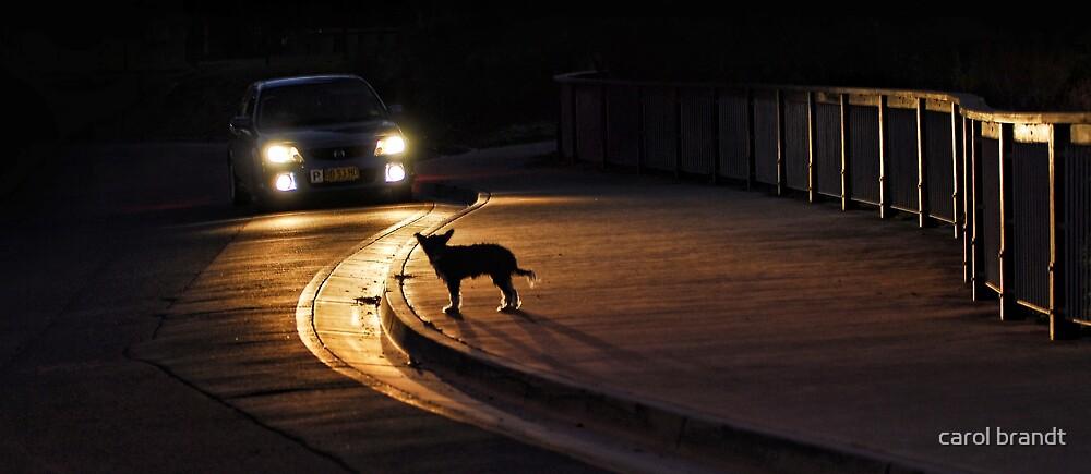 night stray by carol brandt