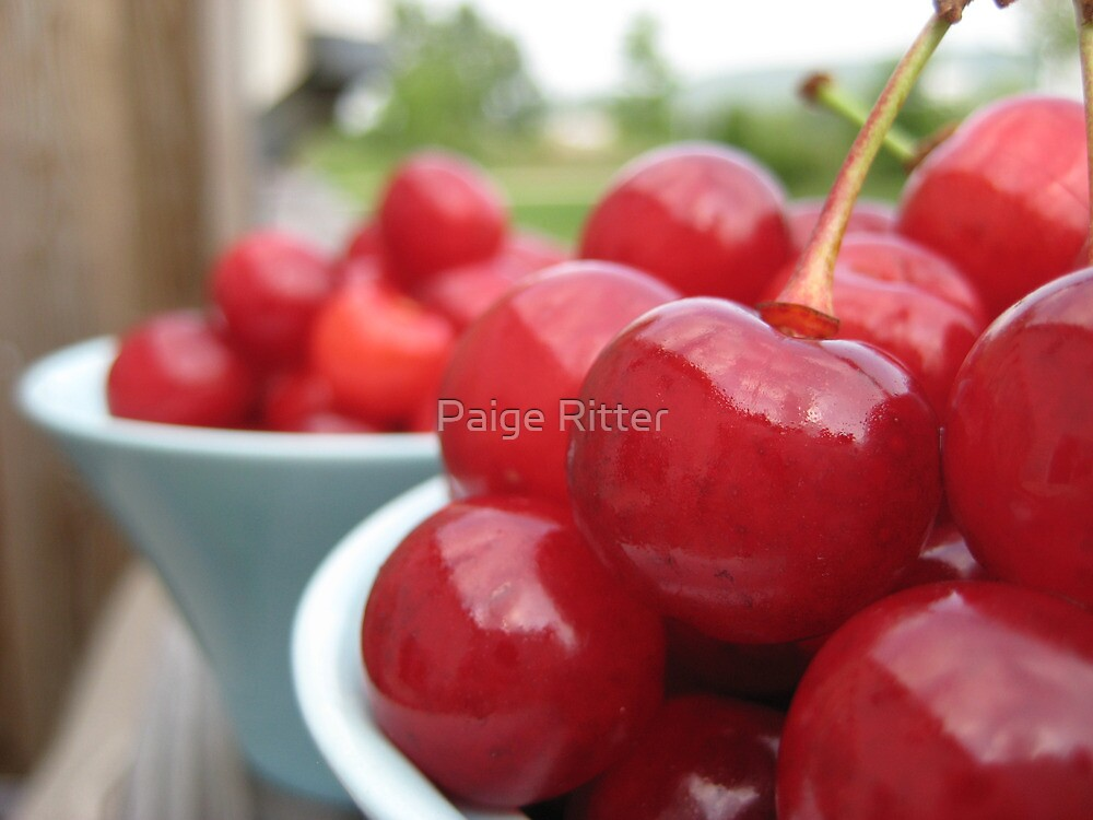 Tart Cherries in the Sun by micala