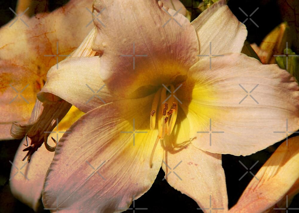 Lovely Lily by Vickie Emms