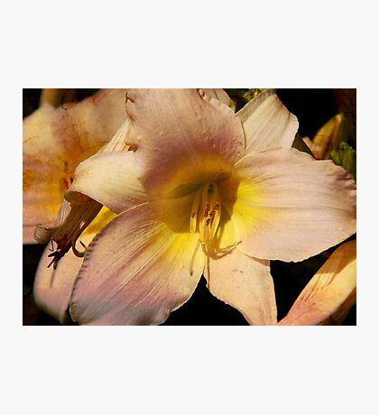Lovely Lily Photographic Print