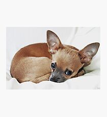 Odie Chillin Photographic Print