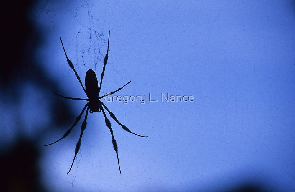 Spider in Shadow by Gregory L. Nance