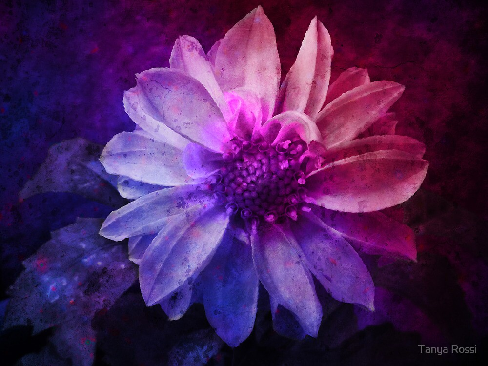 Dahlia Dream by Tanya Rossi