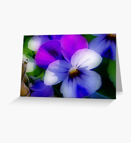 Violet  Colors Greeting Card