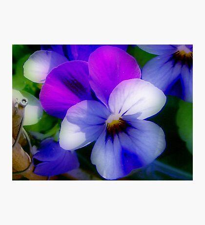 Violet  Colors Photographic Print