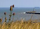 Teasels and Harbour by Carol Bleasdale
