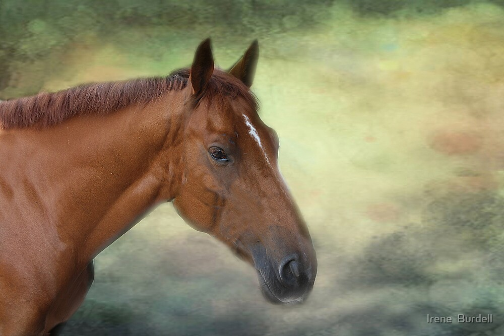 Flash by Irene  Burdell