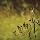 Summer: Grass in the Wind II by Sybille Sterk