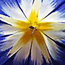Just a little flower. by queenxtc
