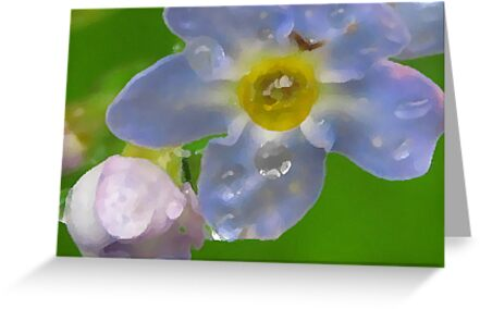 Alaskan Forget me Not by miriamcb