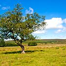 Lonely tree by Elaine123
