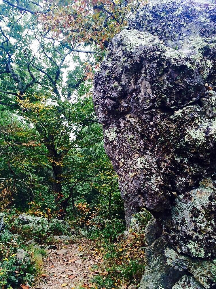 a walk in the woods by TLC1TLC
