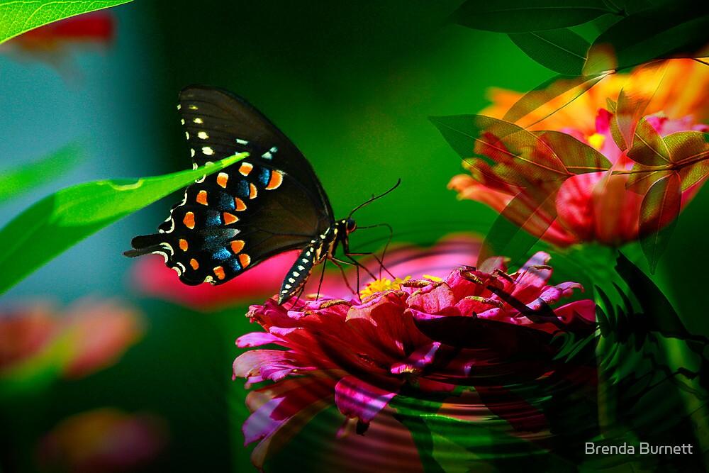 Colors of Summer by Brenda Burnett