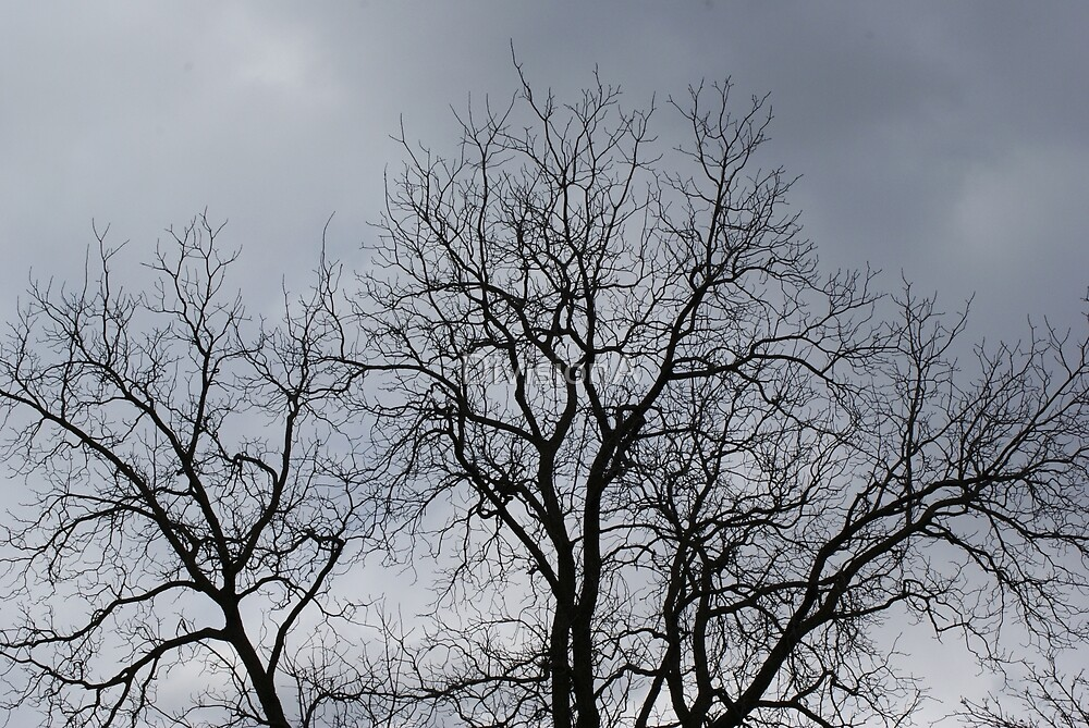 Winter Tree by DivisionA