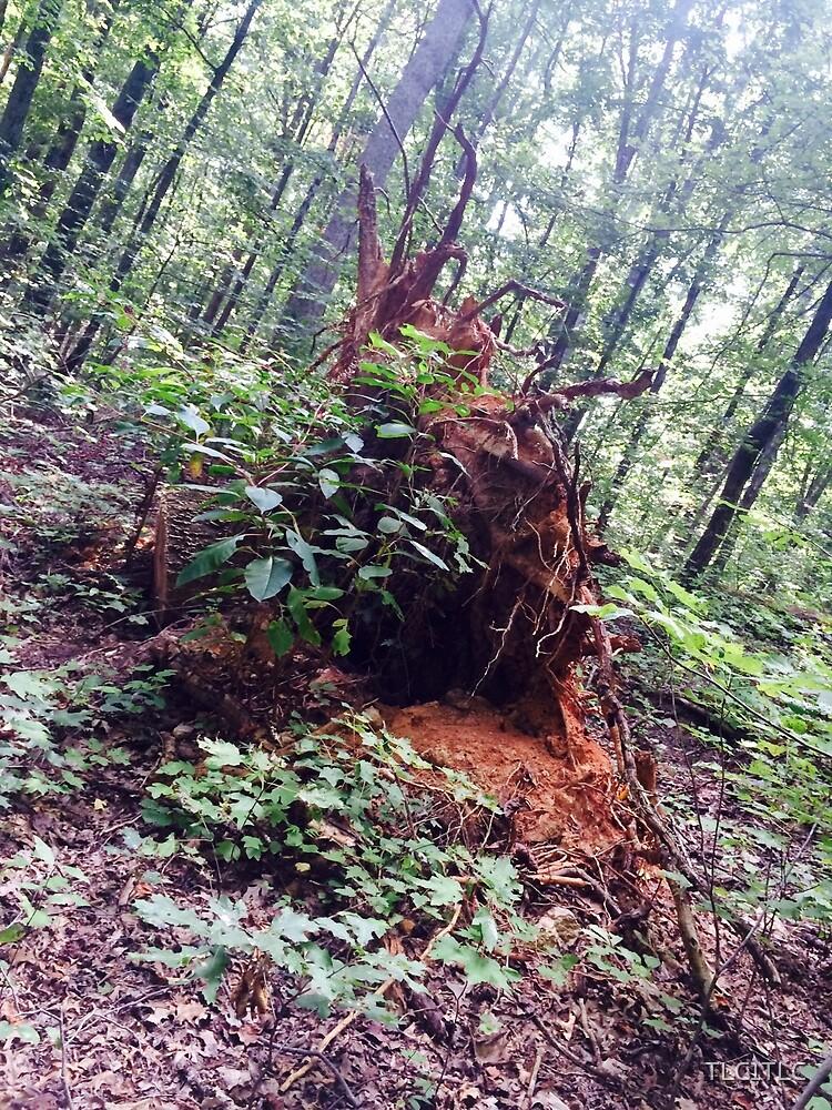tree root profile by TLC1TLC