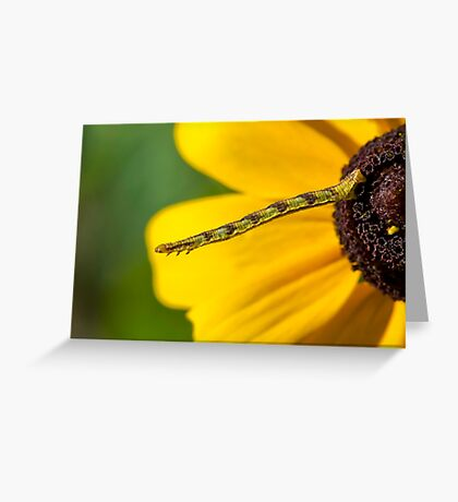 Inchworm Reaching out  Greeting Card