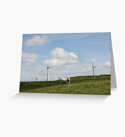 Cow in a Field Greeting Card
