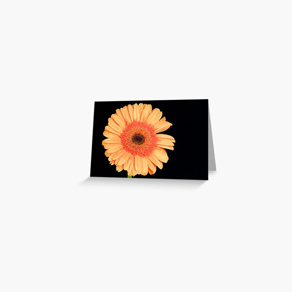 Orange Gerbera Greeting Card