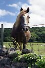 A horse in Llanfairfechan. by Michael Haslam