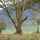 Ngorogoro Crater Landscape by John Dalkin