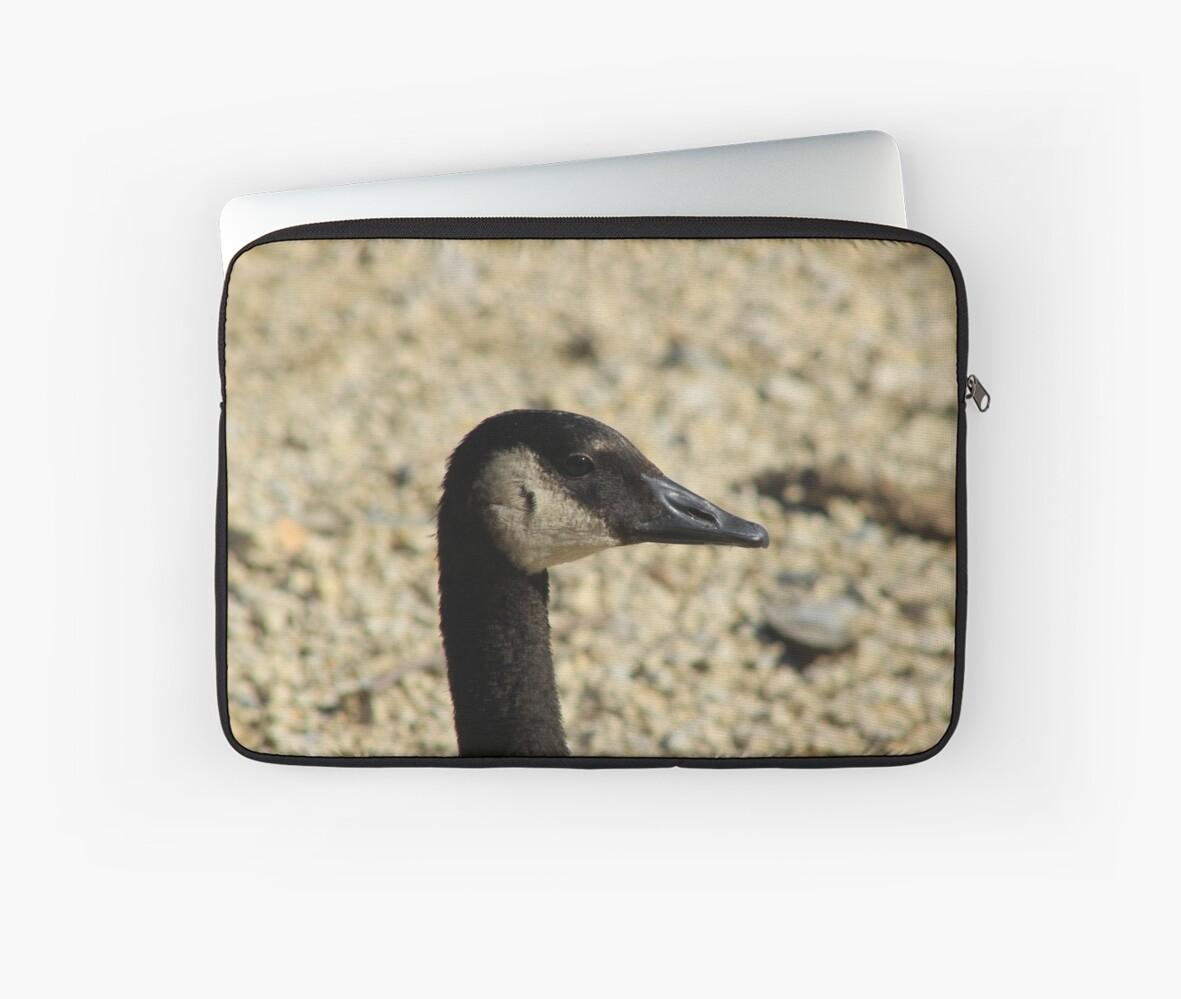 Canada Goose Head by rhamm