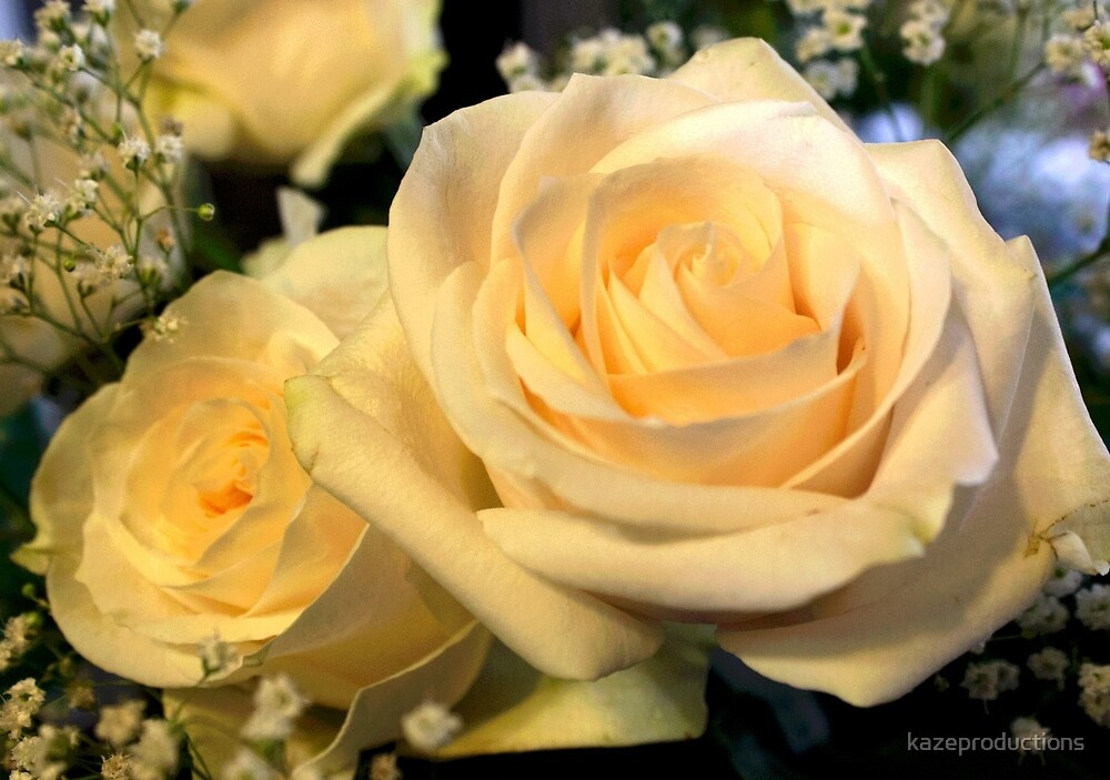 Two white roses by kazeproductions