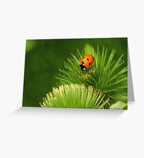 Xena Coccinellidae Greeting Card