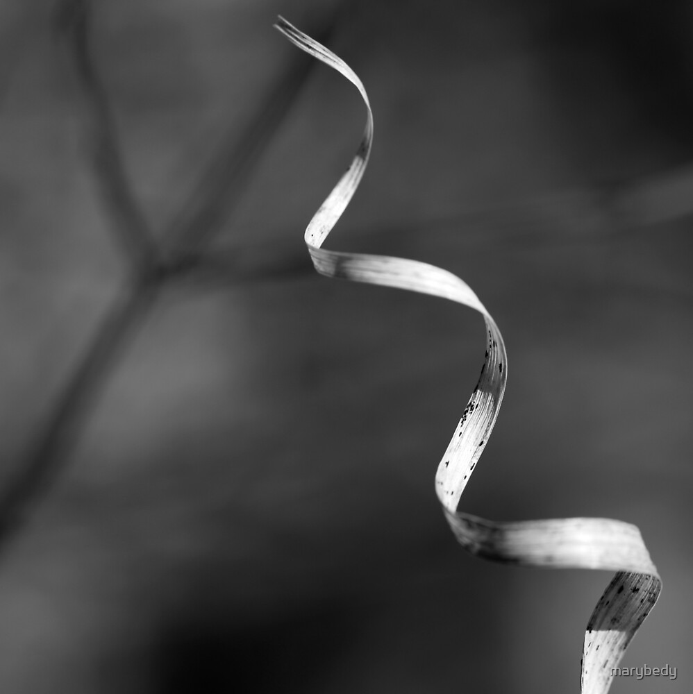 Forest Ribbon 3 BW by marybedy
