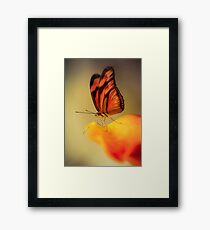 Orange butterfly on yellow and red flower Framed Print