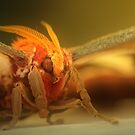 Bug pano by Steve  Taylor