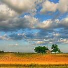 Southern Farmland by WTBird