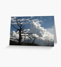 Dead tree and cumulus cloud Greeting Card