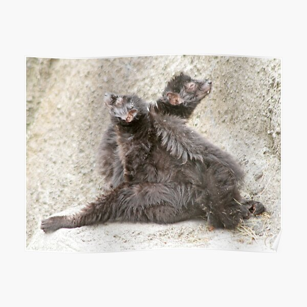 Two lemurs Poster