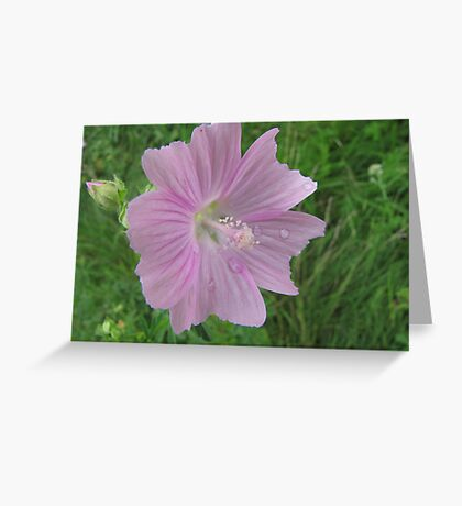 Just a touch of pink Greeting Card