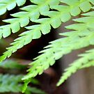 Lovely Green Fern  by Allison  Flores