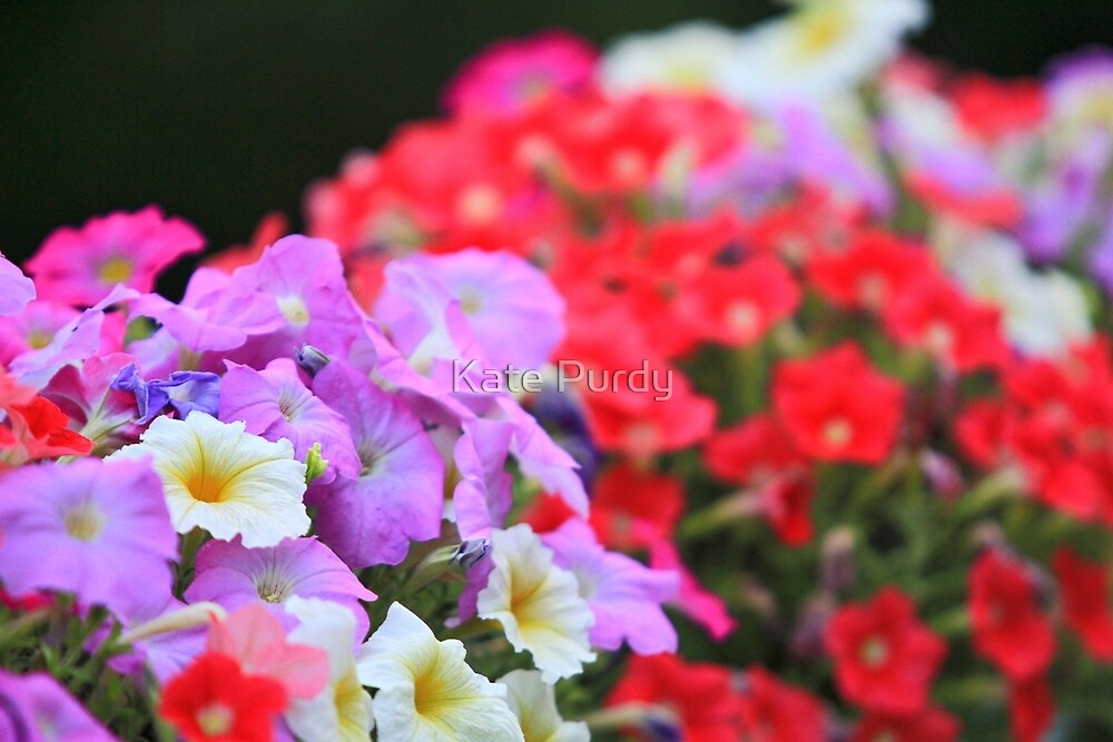 Burst of Summer Color by Kate Purdy
