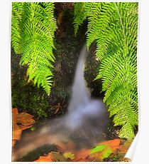 Fern Fantasy Waterfall Poster