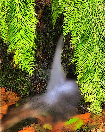 Fern Fantasy Waterfall by Floyd Hopper
