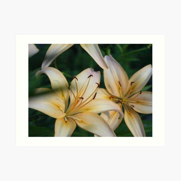 Asian Lily #2 Art Print