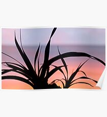 Pandanus Sunset Poster