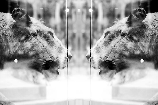 Big Cats   Looking Glass by PhilipCrowther