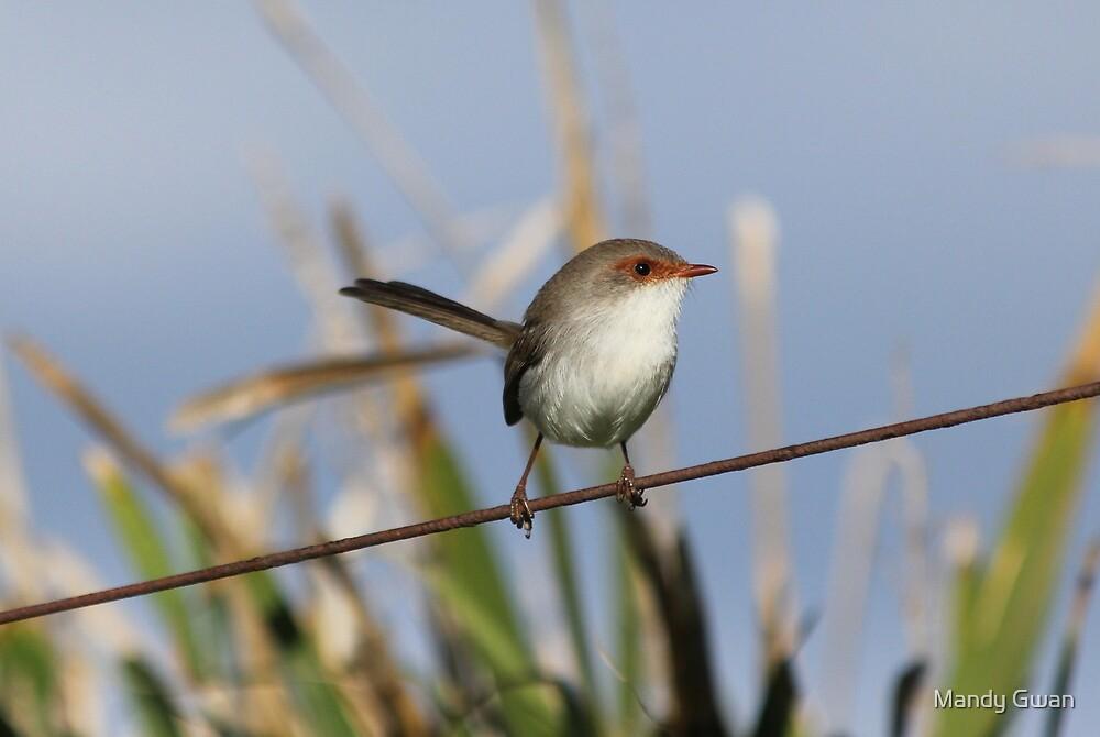 Bird on a Wire by Mandy Gwan
