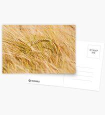 Golden Summers: Bearded Barley Postcards