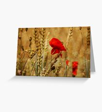 Golden Summers: Poppies in the Wheat Greeting Card