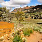 Aroona Valley Ruins by Karina Walther