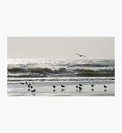 Early Birds - birds on the beach Photographic Print
