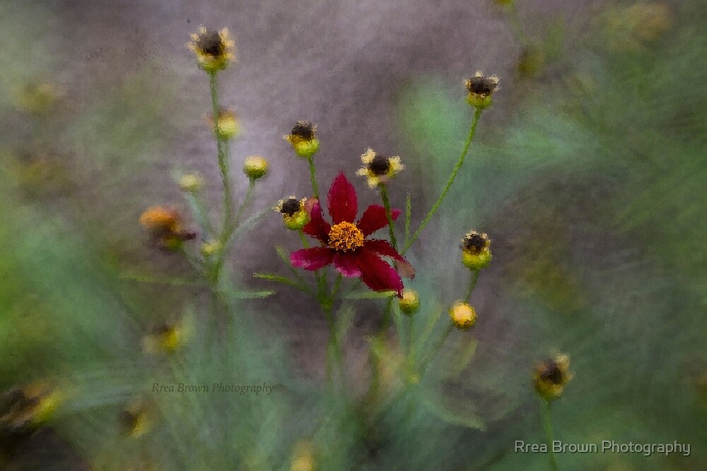 Looking Glass by Rrea Brown Photography