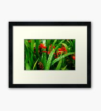 Soft Touch of Orange & Green  Framed Print